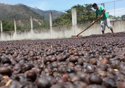 coffee-drying